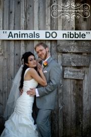 30-Stanleys_maple_lane_farm_wedding
